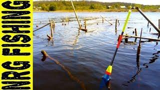 Ловля крупного карася на поплавочные удочки весной