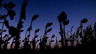 Gustavo Santaolalla - De Ushuaia a la Quiaca [HQ+High Quality Mp3]
