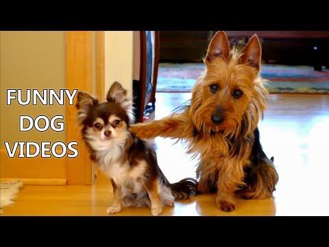 A Hilarious Dog Compilation