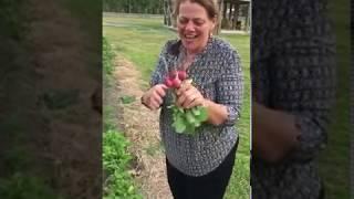 Radishes!  We have radishes! (Uh..now what?)