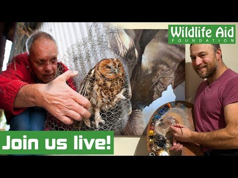 Wildlife rescuer and wildlife artist talk animals