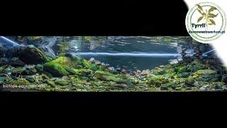 288l akwarium biotopowe. Rzeka Taizi w Chinach