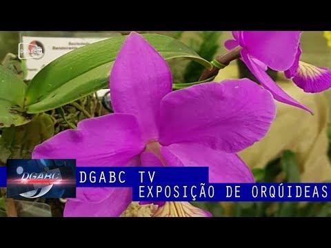 Exposição de orquídeas em São Bernardo comemora aniversário da cidade