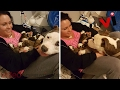Woman Overwhelmed When Her Rescue Pit Bull Places Her 11 Newborn Puppies Into Her Lap