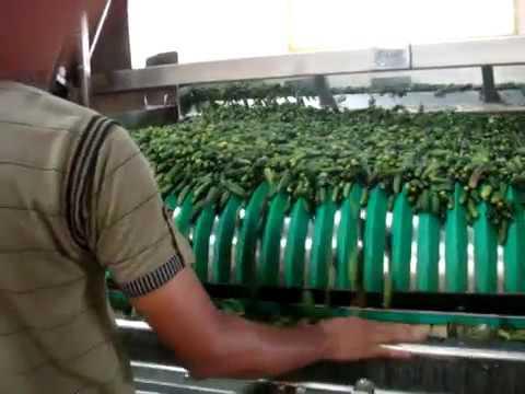 Gherkin High Speed Linear Jar Or Can Filling Machine
