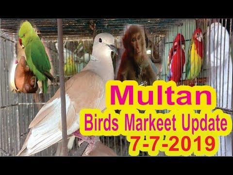Multan Sunday Birds Market Update 7 -7 - 2019 || Multan