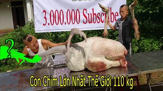 Ăn Mừng 3.000.000 Sub ( Celebrating 3 Million Subscribers! )