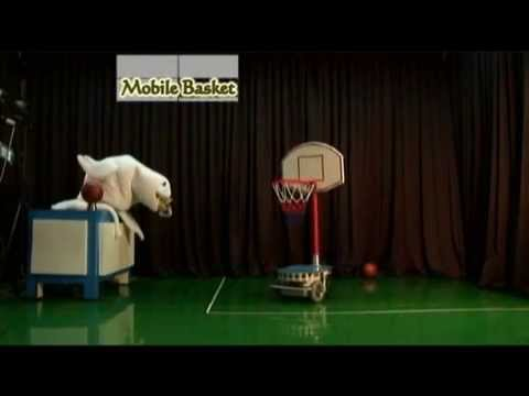 A Cute Robotic Seal Is Better At Basketball Than You Are