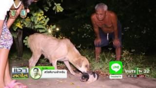ความรักของแม่สุนัข | 13-10-59 | เช้าสดใส | ThairathTV