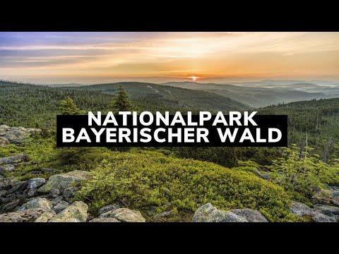 Backpacker neuseeland kennenlernen