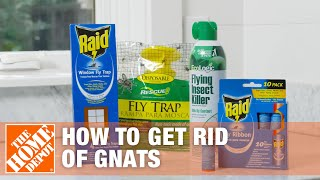 How to Get Rid of Gnats   DIY Pest Control   The Home Depot