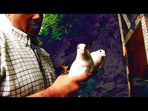 Fieldsports Britain – Hypnotise a bird and avoid a charging lion