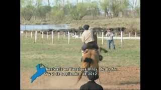 preview picture of video 'Jineteadas en Tapalqué, Provincia de Buenos Aires, 1/9/2012 (Parte 2)'