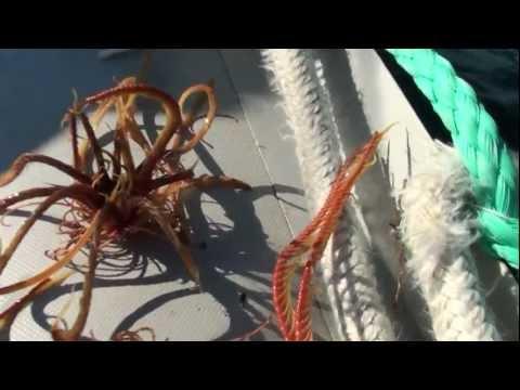 百多米深海底釣上來的不知名生物