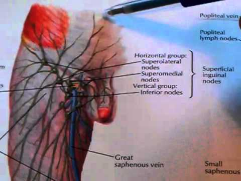 Volk verschreibungspflichtige Behandlung von Prostatitis Rüben