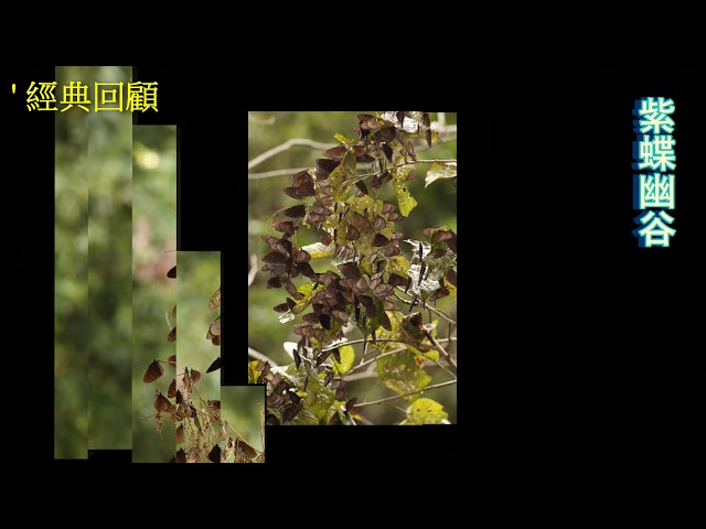 <html> <body> Film for Purple Butterfly2020-3-28 </body> </html>