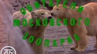 """Утренняя почта № 10. """"Зоопарк""""   Утренняя почта (1983)"""