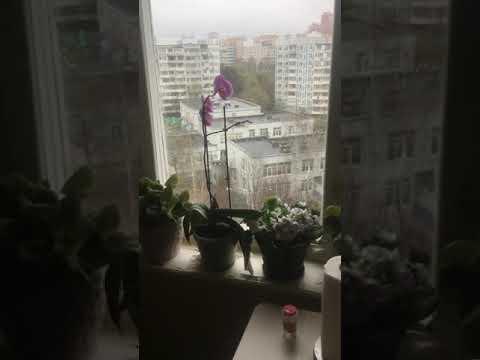 #комната 12,4 м в 3-комн #квартире #Химки #метро #Планерная #хорошее #состояние #АэНБИ #недвижимость