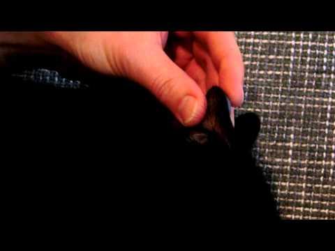 Knoblauchtinktur mit Meerrettich Senkung des Blutzucker