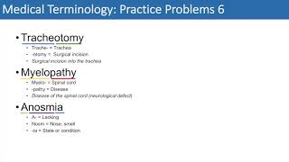 Medical Terminology | The Basics and Anatomy | Practice Problems Set 1