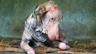 This Dog Was Sick And Covered In Mange. But The Photos Of His Transformation Are Heartwarming