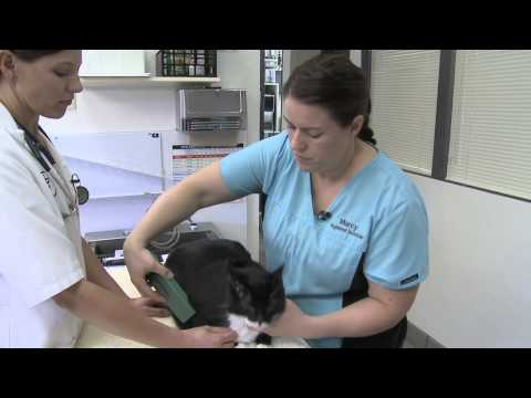 Microchipping can help a lost pet return home