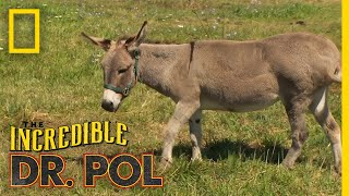 A Horse & Donkey Get Their Teeth Checked | The Incredible Dr. Pol