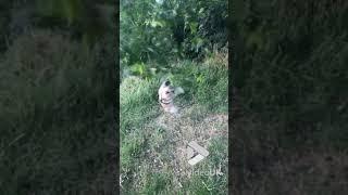 animales el perro no se va