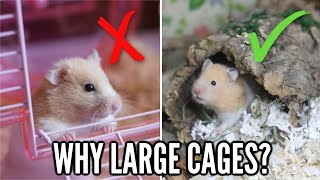 Why Hamsters Need LARGE Cages
