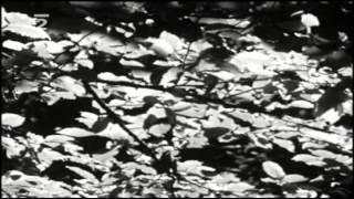 Petr Rezek -  S písní lesů, vod a strání (1975)