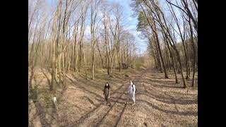 First fpv flight in the woods with the chicks!