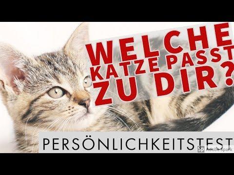 😺 Welche Katze passt zu dir? Persönlichkeitstest! 😺