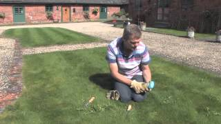 How to Get Rid of Weeds in the Lawn | Video | Roundup Weedkiller