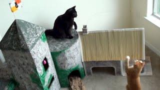 EPIC Cat Castle!