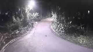 Guarda Municipal de Santos evita furto de fiação no Jardim Botânico