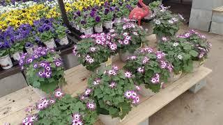 🌸 Lowe's Spring Flowers Walk-Through 🌸