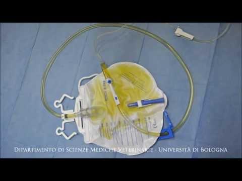Thrombophlebitis purulento di una vena vorotny