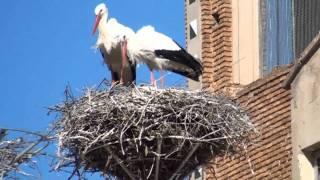 Video del alojamiento Cigüeña de Alfaro
