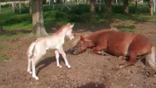 The Worlds Cutest Baby Horse !