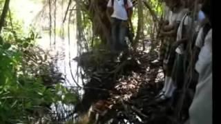 """Evidencias Grupo de Investigadores """"Los guardianes del Agua"""" 1/3"""