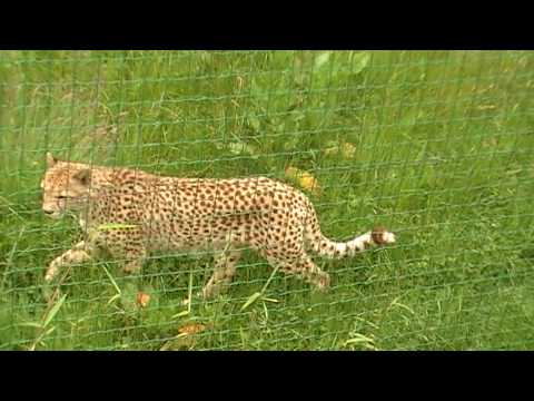 Zoo in Overloon