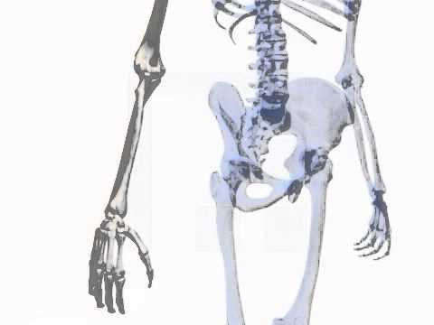 Schmerz an einer Stelle des Bauches nach hinten abstrahlende
