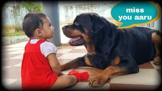 jerry love aura  Dog protecting baby   dog love newborn baby  