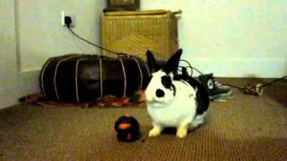 A FURRY WORLD | Rabbit Boarding | Critter Boarding | Islington | North London | N1