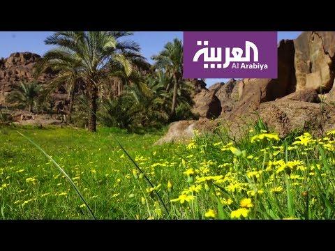 العرب اليوم - شاهد: مغامرات في وادي مشار في حائل