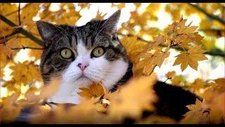秋のねこ2。-Maru&Hana in Autumn 2.-