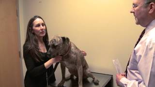 Outside Dogs - Alyssa Thompson, DVM  Dogwood Emergency Veterinarian