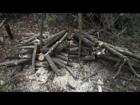 Как экономно резать дрова бензопилой.