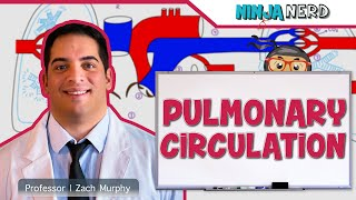 Circulatory System | Pulmonary Circulation