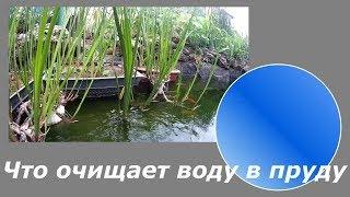 Экосистема домашнего пруда. Очистка и фильтрация водоема
